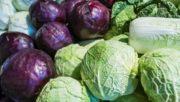 Repolho Emagrece Controla a Glicemia e Faz Bem para a Saúde